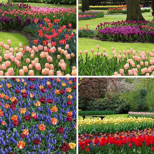 Garden and Flower 2x2 Ceiling Tiles